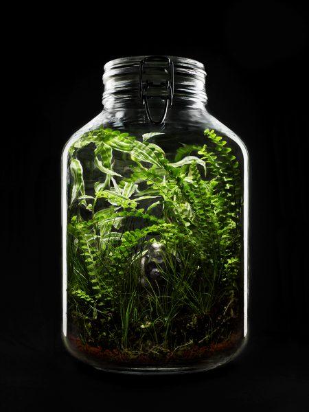 Beliebt Bevorzugt Flaschengarten – Mein Flaschengarten #CR_32
